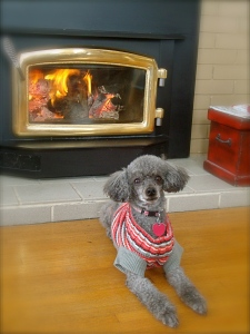 Mitzi had the right idea.  Warm sweater dress on and parked in front of the fire.  All . day . long !!!